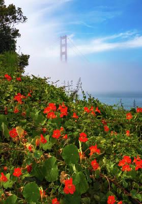 Photograph - Golden Gate Blooms by Darren White