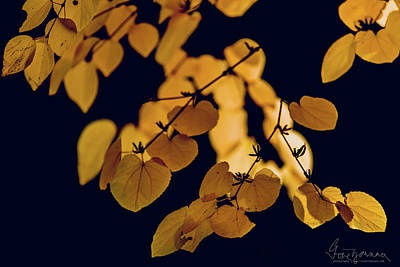 Photograph - Golden by Gene Garnace