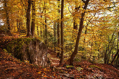 Photograph - Golden Glimpses Of Autumn by Jenny Rainbow