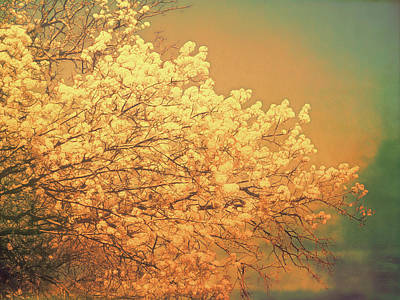 Photograph - Golden Glow by Ann Powell