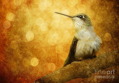 Kingfisher Digital Art - Golden Glow by Lee-Anne Rafferty-Evans