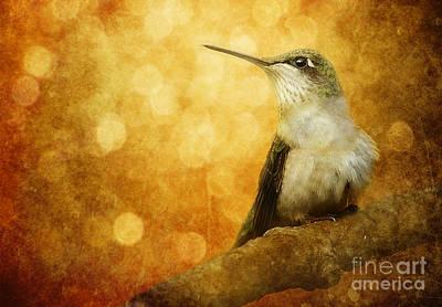 Kingfisher Digital Art - Golden Glow by Lee-Anne Rafferty-Evans