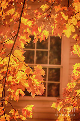 Photograph - Golden Glow Of Autumn by Elizabeth Dow