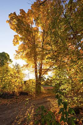 Photograph - Golden Glow  by Robert McKay Jones