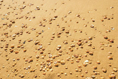 Photograph - Golden Goodies On A Beach Because Its Summer - Left View by Georgia Mizuleva