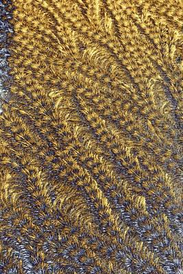 Photograph - Golden Grains - Hoarfrost On A Solar Panel by Kim Bemis