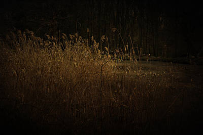 Print featuring the photograph Golden Grass by Ryan Photography