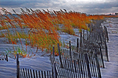 Weed Digital Art - Golden Grasses And The Beach by Michael Thomas