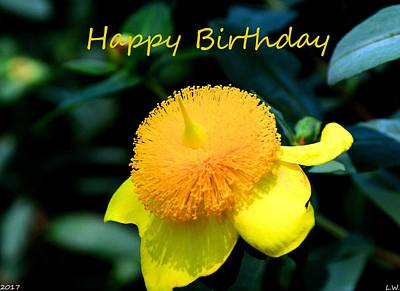 Photograph - Golden Guinea Happy Birthday by Lisa Wooten