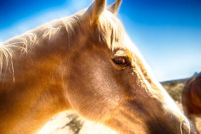 Digital Art - Golden Halo Horse by Bartz Johnson