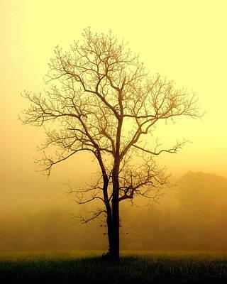 Mistletoe - Golden Haze by Marty Koch