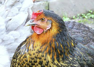 Golden Hen Art Print