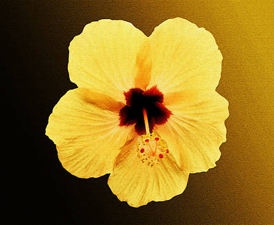 Photograph - Golden Hibiscus by Laura Greco