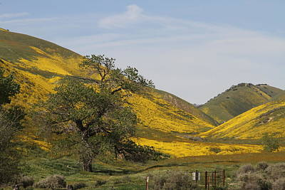Photograph - Golden Hills by Diana Chase