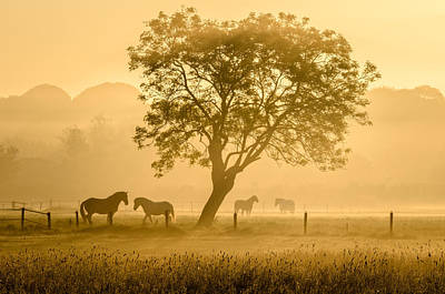 Landscapes Photograph - Golden Horses by Richard Guijt