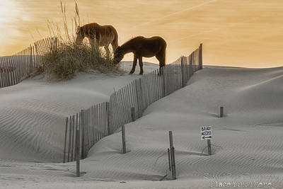 Photograph - Golden Horses by Russell Pugh