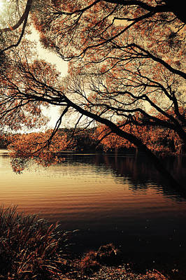 Photograph - Golden Hour.  Airy Lace Of Autumn by Jenny Rainbow