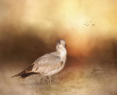 Of Birds Photograph - Golden Hour At The Beach by Kim Hojnacki