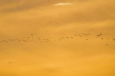 Photograph - Golden Hour by Dan Friend