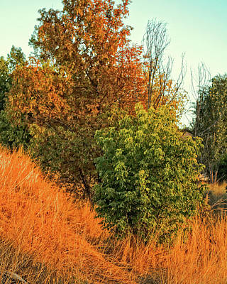 Fall Photograph - Golden Hour by David King