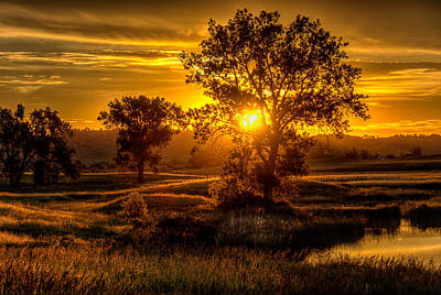 Photograph - Golden Hour by Fiskr Larsen
