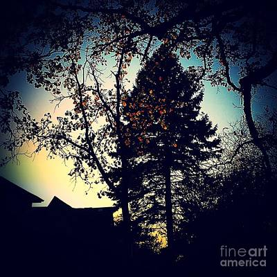 Frank J Casella Royalty-Free and Rights-Managed Images - Golden Hour Foliage by Frank J Casella