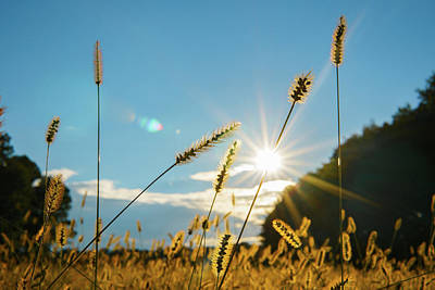 Photograph - Golden Hour Grass by Mark Robert Rogers