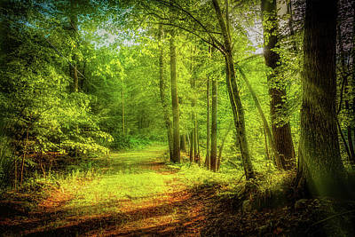 Photograph - Golden Hour In The Forest by Lilia D
