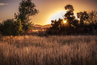 Photograph - Golden Hour by Janice Bennett
