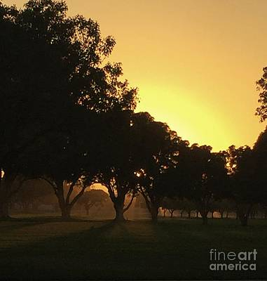 Photograph - Golden Hour by Jenny Revitz Soper