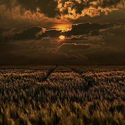 Cornfields Photograph - Golden Hour by Joachim G Pinkawa