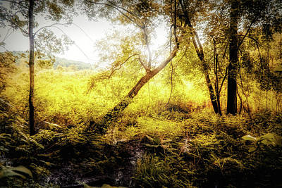 Photograph - Golden Hour Light by Lilia D