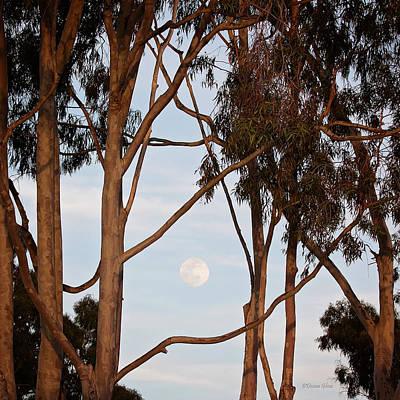 Photograph - Golden Hour Moon by Deana Glenz