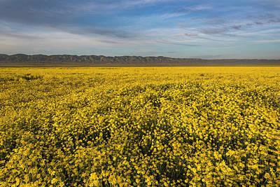 Photograph - Golden Hour On The Plain by Scott Cunningham