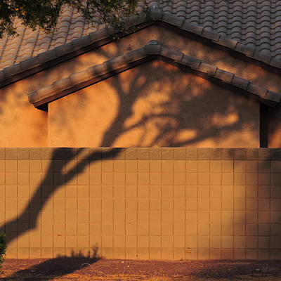 Photograph - Golden Hour Tree Shadow by Bill Tomsa