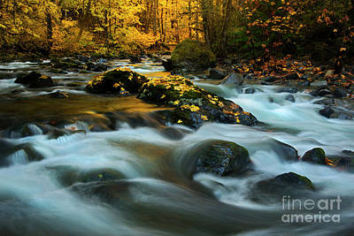 Photograph - Golden In The Light by Mike Dawson