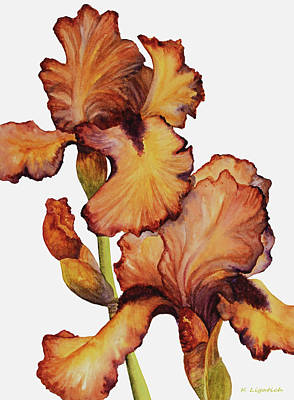 Painting - Golden Iris by Kerri Ligatich