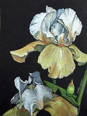 Painting - Golden Iris by Sue Henson