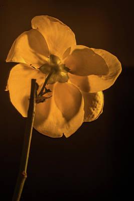 Photograph - Golden Japanese Anemone Backside by Douglas Barnett