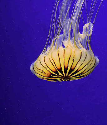Golden Jellyfish Art Print by Rosalie Scanlon