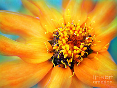 Photograph - Golden by Judi Bagwell