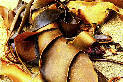 Photograph - Golden Kelp by Nareeta Martin