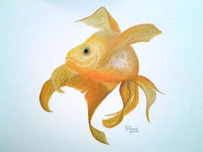 Koi Drawing - Golden Koi by David Richardson