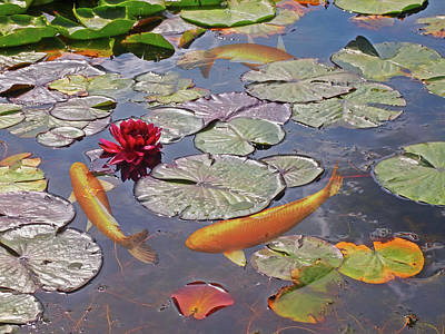 Photograph - Golden Koi Pond by Gill Billington