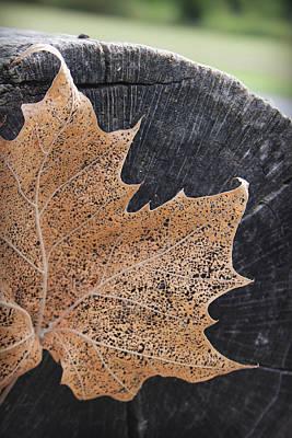 Photograph - Golden Lace Leaf Against A Grey Log by Kelly Hazel