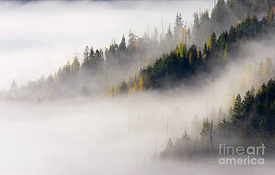 Photograph - Golden Larch Morning by Mike Dawson