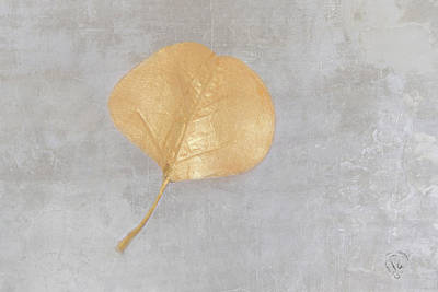 Photograph - Golden Leaf by Pamela Williams