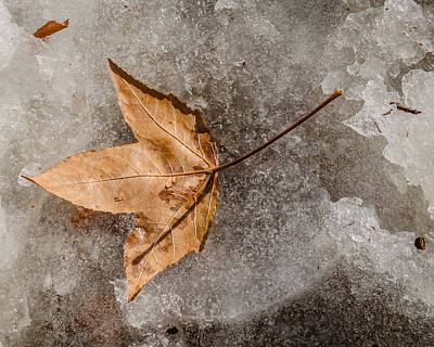 Photograph - Golden Leaf by Stephanie Maatta Smith