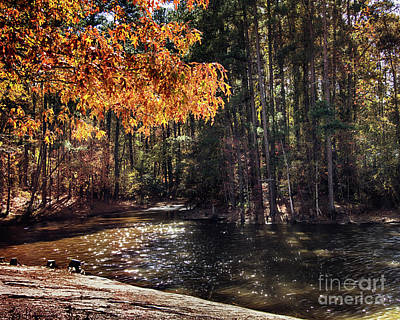 Fall Photograph - Golden Leaves At Dupree Park by Tom Gari Gallery-Three-Photography
