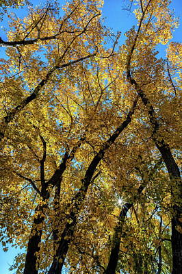 Photograph - Golden Leaves, Blue Sky And A Starburst by Tony Hake